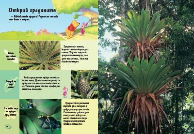 10: Растенията
