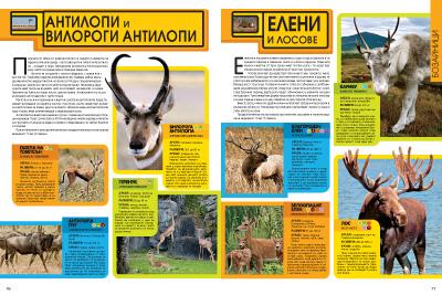 Енциклопедия на животните