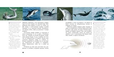 Очи в очи с делфините