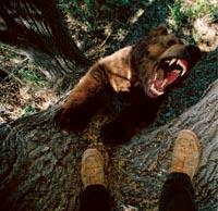 Очи в очи с мечките гризли