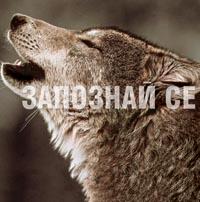 Очи в очи с вълците